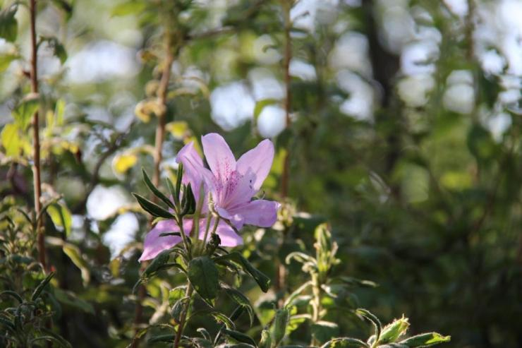 koko-en-garden-49