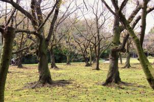 kurakuen-garden-56
