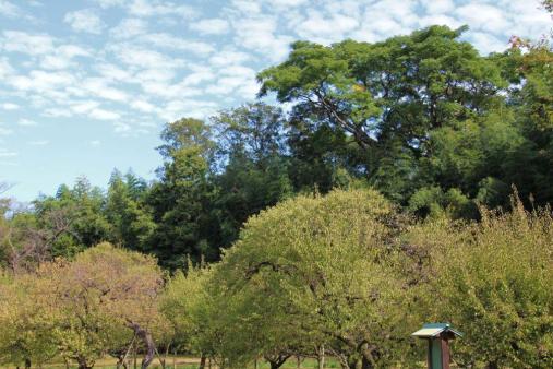 kurakuen-garden-59