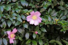 kurakuen-garden-70
