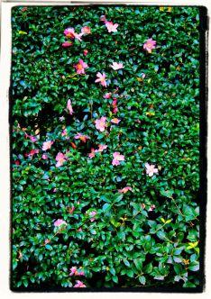 kurakuen-garden-71