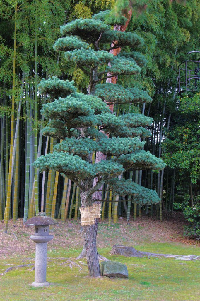 kurakuen-garden-72