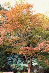 kurakuen-garden-76