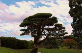 kurakuen-garden-83