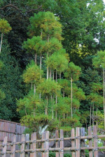 kurakuen-garden-84