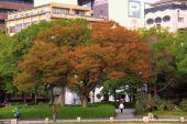peace-memorial-park-26
