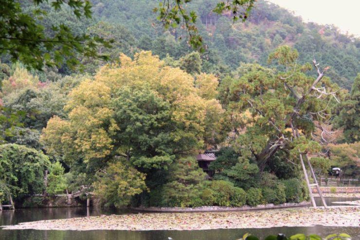 ryoan-ji-temple-25