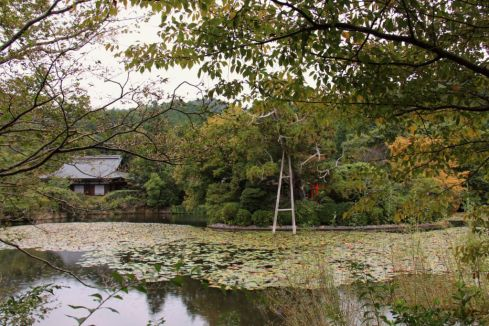 ryoan-ji-temple-27