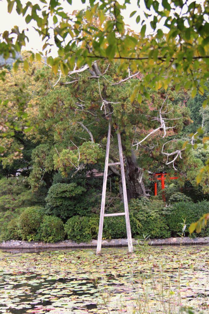 ryoan-ji-temple-28