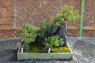 senko-ji-temple-45