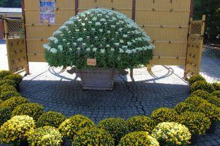 shinjuku-gyoen-garden-1