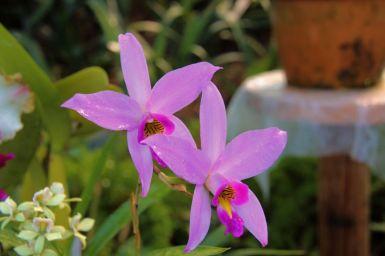 shinjuku-gyoen-garden-10