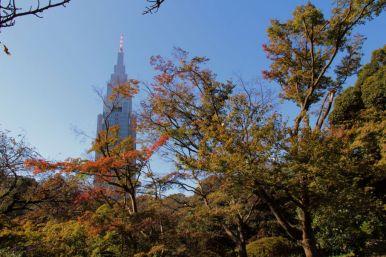 shinjuku-gyoen-garden-100