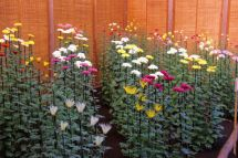 shinjuku-gyoen-garden-101