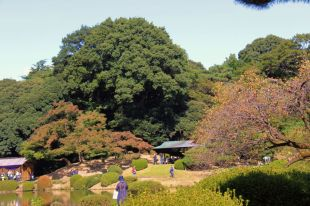 shinjuku-gyoen-garden-105