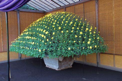shinjuku-gyoen-garden-106