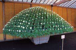 shinjuku-gyoen-garden-107