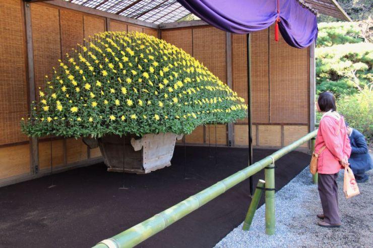 shinjuku-gyoen-garden-108