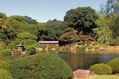 shinjuku-gyoen-garden-109