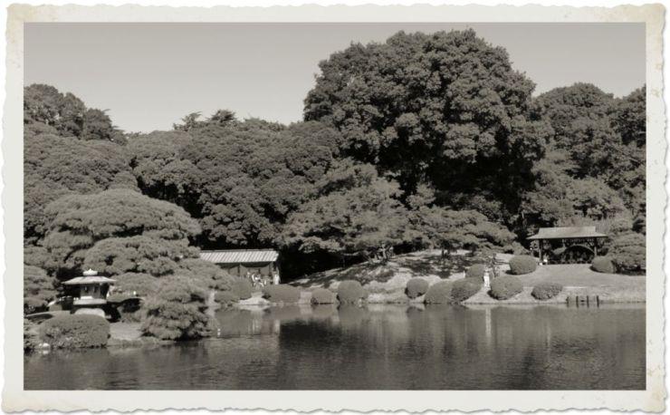 shinjuku-gyoen-garden-110