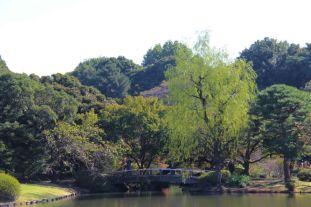 shinjuku-gyoen-garden-113