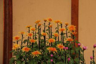 shinjuku-gyoen-garden-114
