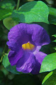 shinjuku-gyoen-garden-13