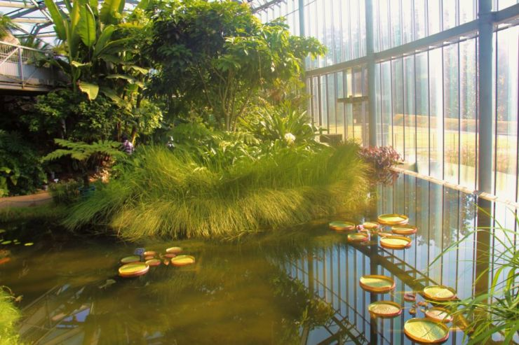 shinjuku-gyoen-garden-14