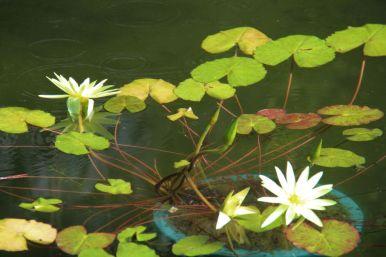 shinjuku-gyoen-garden-15