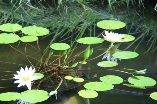 shinjuku-gyoen-garden-16