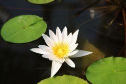 shinjuku-gyoen-garden-19