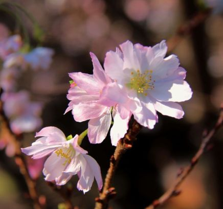shinjuku-gyoen-garden-2
