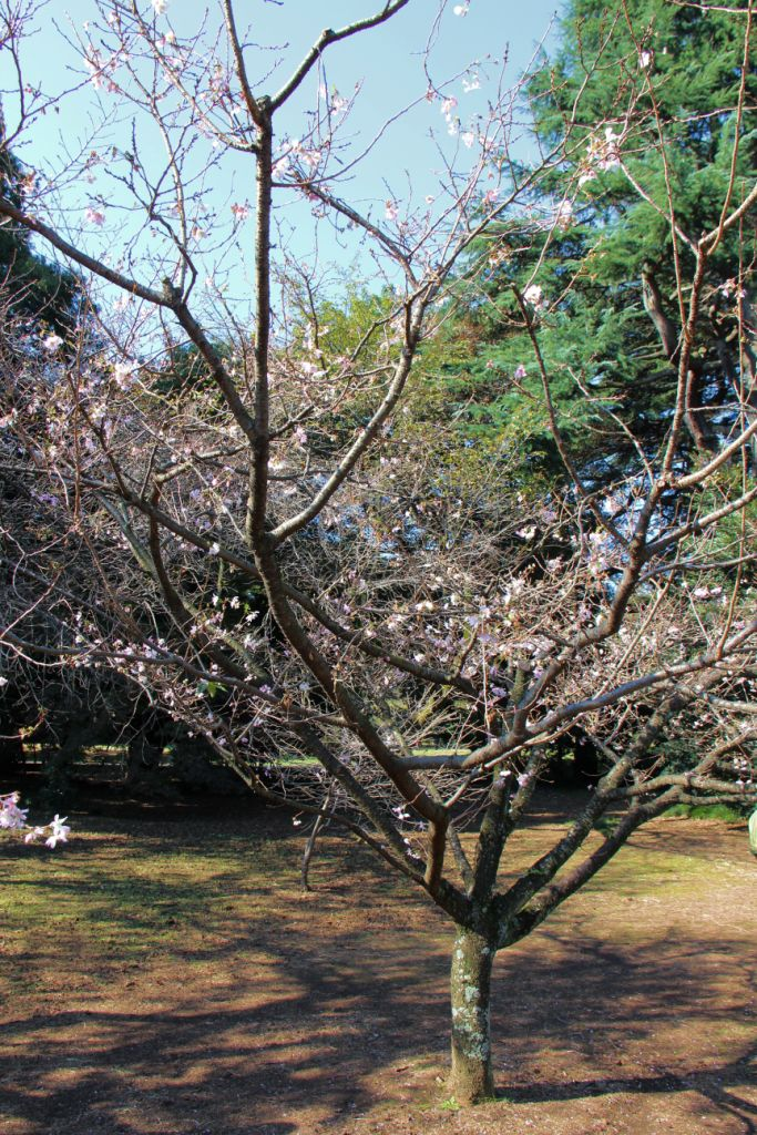 shinjuku-gyoen-garden-3