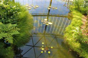shinjuku-gyoen-garden-32