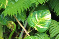 shinjuku-gyoen-garden-35