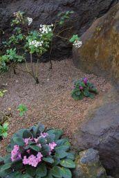 shinjuku-gyoen-garden-36