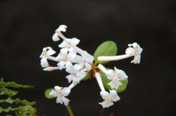 shinjuku-gyoen-garden-37