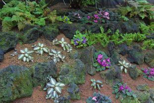 shinjuku-gyoen-garden-38