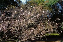shinjuku-gyoen-garden-4