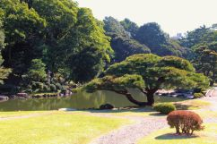 shinjuku-gyoen-garden-47
