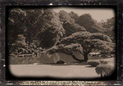 shinjuku-gyoen-garden-48