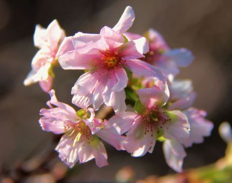 shinjuku-gyoen-garden-5