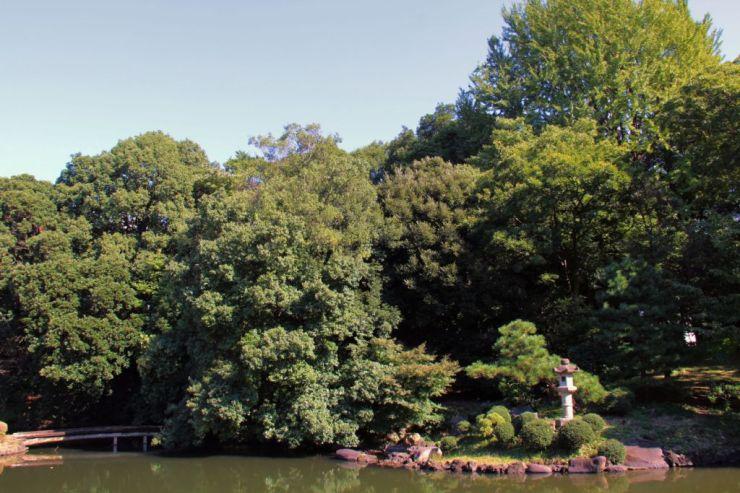 shinjuku-gyoen-garden-53