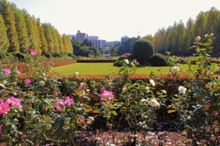 shinjuku-gyoen-garden-54