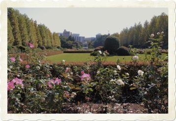 shinjuku-gyoen-garden-55