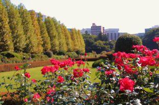 shinjuku-gyoen-garden-56