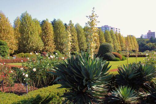 shinjuku-gyoen-garden-57