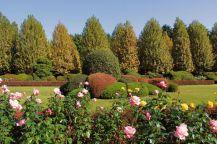 shinjuku-gyoen-garden-59