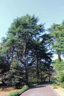 shinjuku-gyoen-garden-6
