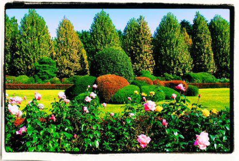 shinjuku-gyoen-garden-60